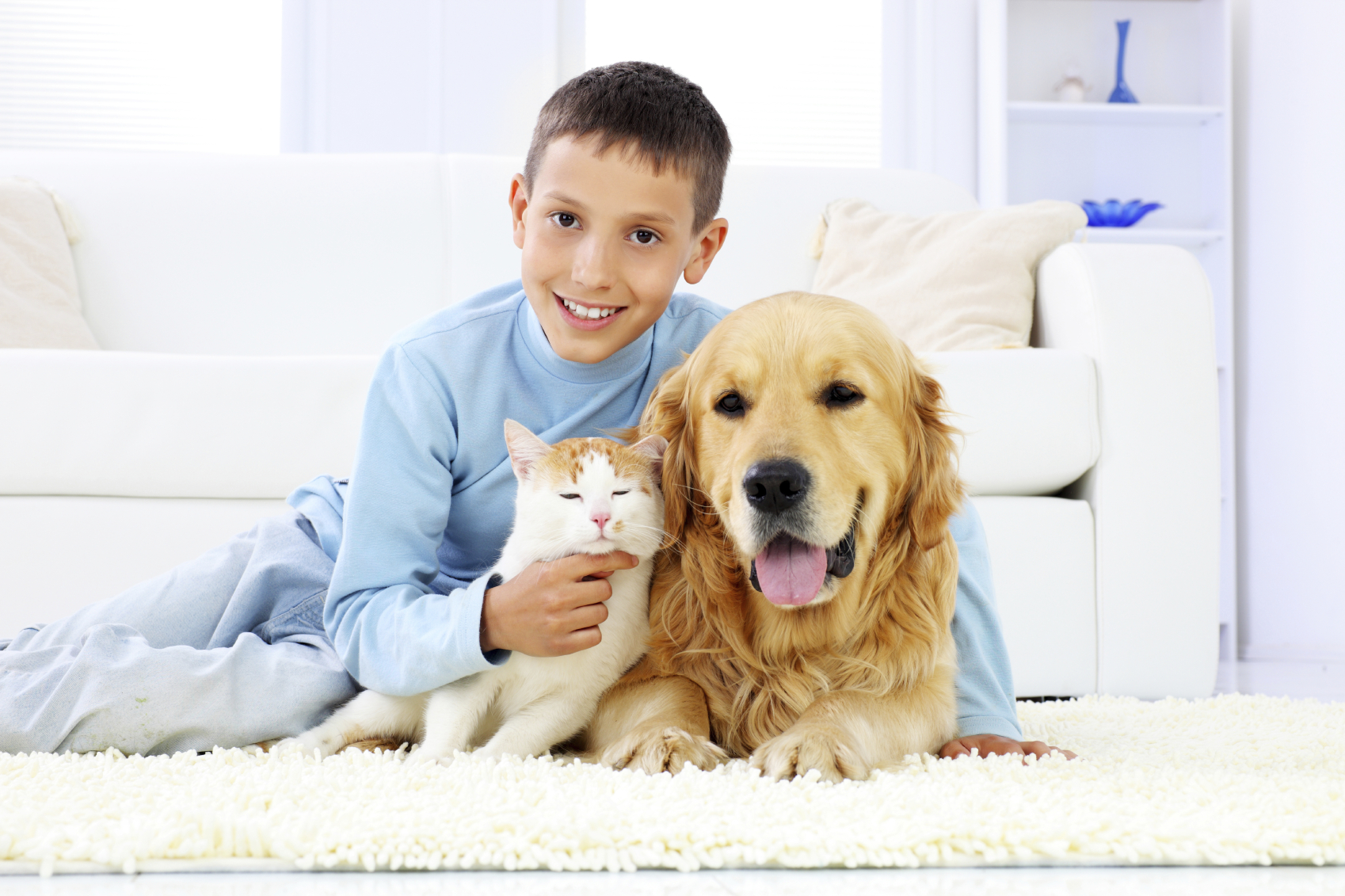 Pet Stain Removal Tips Chem Dry